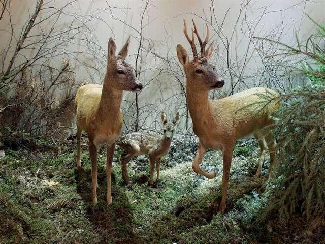 Zwierzęta Warmii i Mazur - wystawa stała - full image