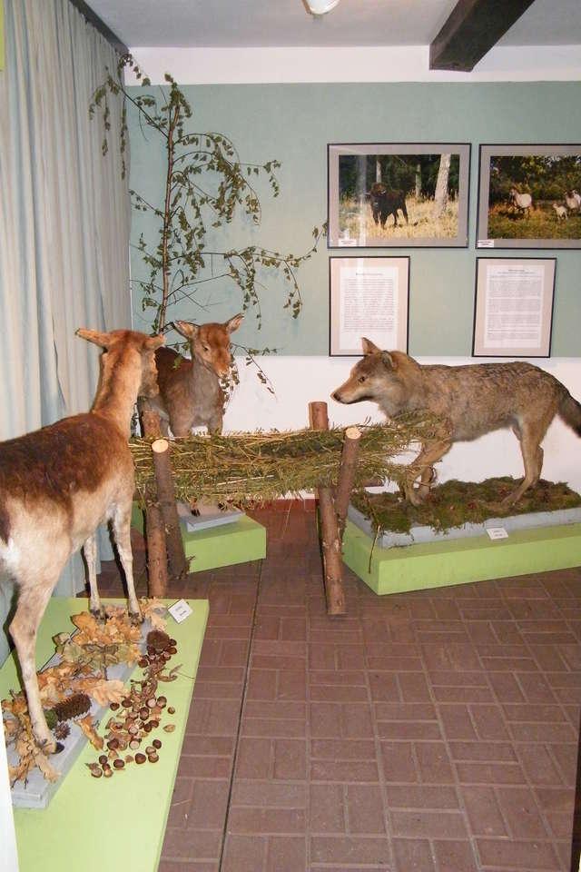 Wystawa: Świat zwierząt Pojezierza Mazurskiego - wystawa stała.  - full image