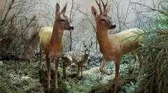 Zwierzęta Warmii i Mazur - wystawa stała