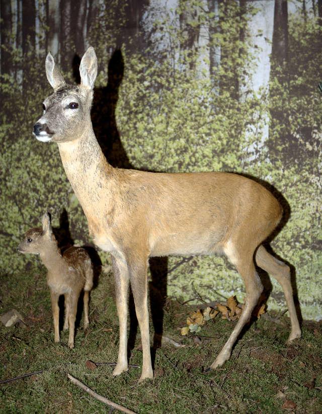 Ferie w Muzeum Przyrody w Olsztynie - full image