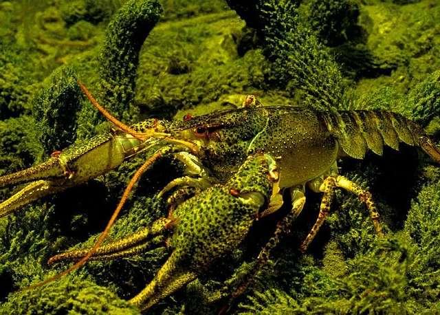 Spotkania z przyrodą - full image