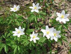 Wiosenne kwiaty