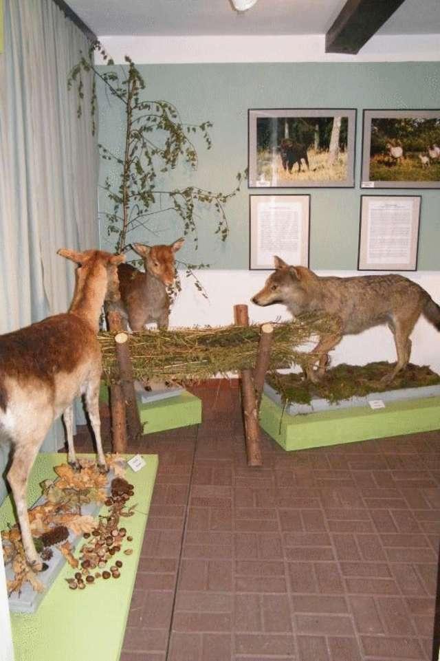 Wystawa: Świat zwierząt Pojezierza Mazurskiego - full image