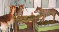 "Exhibition: ""The Animal World of the Masuria Lake District"""