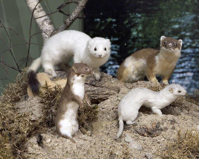 Warsztaty przedświąteczne w Muzeum Przyrody - full image