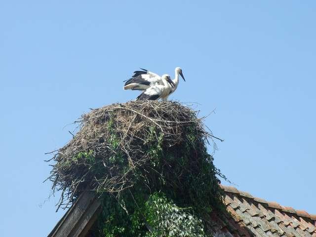 Zjazd ornitologów i miłośników ptaków Warmii i Mazur - full image