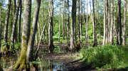 Prezentacja filmów: Skrzydlaci sprzymierzeńcy lasu i Funkcje lasu