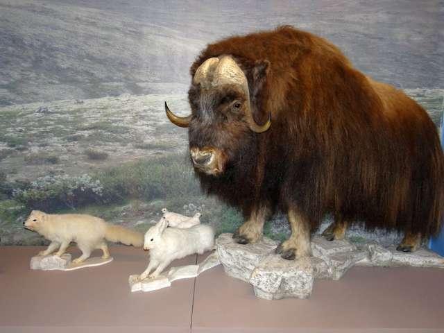 """Wernisaż wystawy """"Zwierzęta epoki lodowcowej"""" - full image"""