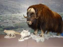 """Wernisaż wystawy """"Zwierzęta epoki lodowcowej"""""""