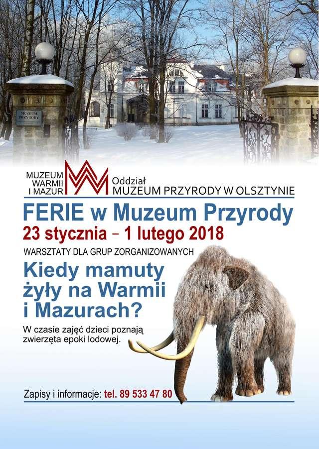 Ferie w Muzeum - Muzeum Przyrody w Olsztynie - full image