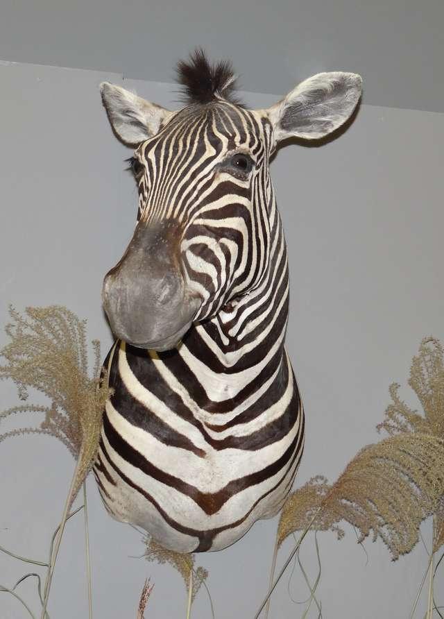 Zwierzęta Afryki cz. II   - full image