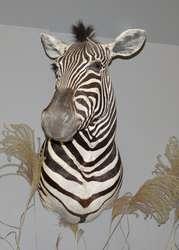 Zwierzęta Afryki cz. II