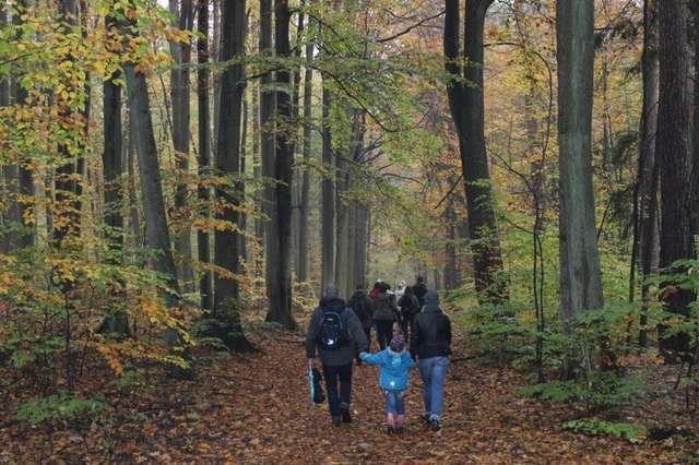 Spacer krajobrazowy w Olsztynie - full image