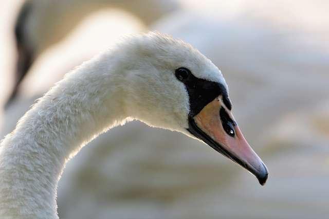 Blaski i cienie ratowania zwierząt - full image