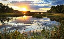 Międzynarodowy Dzień Obszarów Wodno-Błotnych i Bagiennych