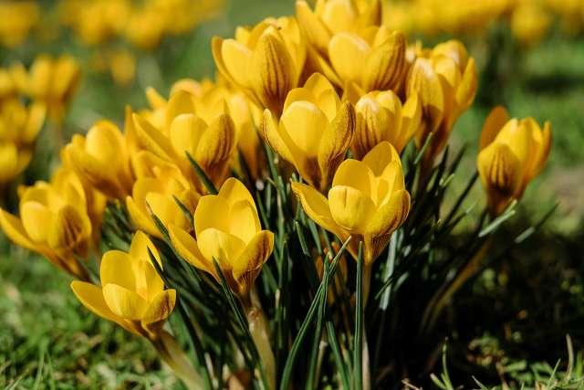 Warsztaty przedświąteczne Wielkanoc na Warmii i Mazurach - full image