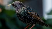 Wiosenne ptaki Warmii i Mazur