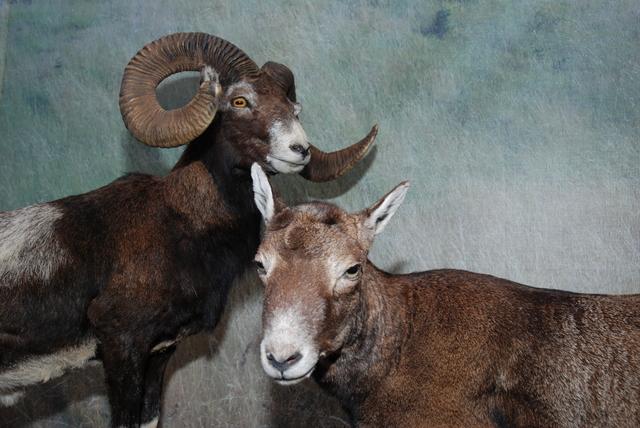 Obce i nowe gatunki zwierząt kręgowych w faunie Warmii i Mazur - full image