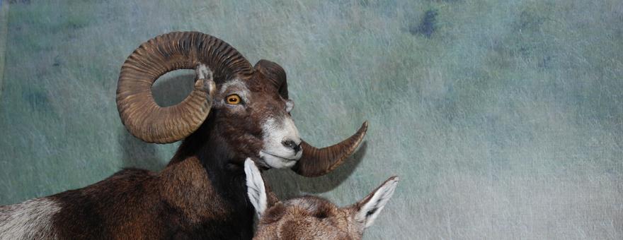 Obce i nowe gatunki zwierząt kręgowych w faunie Warmii i Mazur
